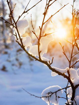 Snow:light