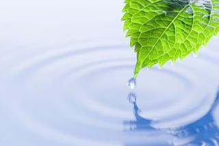 Zen leaf in water