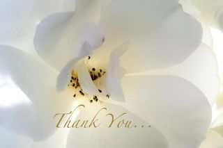 Thank you orchid