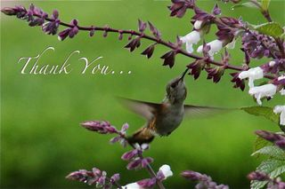 Thank you humming bird